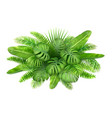 a bunch of tropical leaves vector image