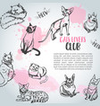 background with cat breeds cats lovers club cute vector image