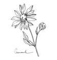 chamomile floral botanical flower black vector image vector image