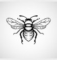 engraving of honey bee on white background vector image vector image