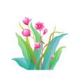 magnolia flowers fine art arrangement isolated vector image vector image