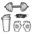 set isolated gym equipment sketch vector image
