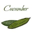 tasty veggies cucumber vector image vector image
