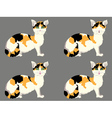 Tortoiseshell Cat with Green Eyes vector image vector image