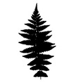 Fern silhouette vector image vector image
