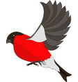 flying bullfinch vector image vector image
