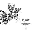 hand drawn background with jojoba vintage vector image vector image