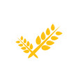 wheat agriculture graphic design template vector image