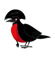 cartoon smiling umbrellabird vector image vector image