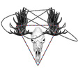 Moose skull and beads vector image