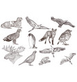 set detailed hand drawn animals vector image