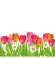 Tulip flowers isolated on white vector image vector image