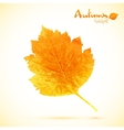 Autumn watercolor leaf vector image vector image