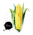 Corncob with leaf Hand drawn watercolor painting vector image vector image