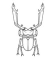hand drawn beetle vector image vector image