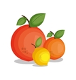 icon lemon orange design vector image