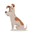Jack Russell Terrier Dog Breed Isolated on White vector image