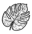 monstera leaf isolated plant sketch scratch vector image vector image