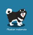 an depicting a cute alaskan malamute dog vector image