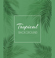 beautiful palm leaf background vector image vector image