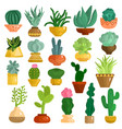 cacti succulents in pots set vector image vector image