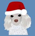 poodle in santa cap close up vector image vector image
