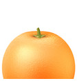 realistic orange fruit 3d isolated closeup vector image vector image