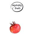 ripe and fresh tomato watercolor vector image vector image