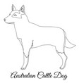 australian cttle dog outline vector image vector image