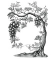 grape tree hand drawing vintage engraving on vector image vector image