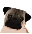 pug close up vector image