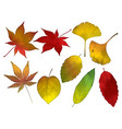 an autumn leaves set vector image