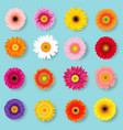 big colorful gerbers set vector image vector image