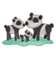 cartoon pandas couple with cub over grass in vector image vector image