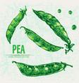 digital detailed line art color pea vector image vector image