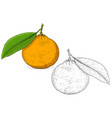 mandarin orange colored and black and white hand vector image vector image
