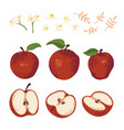 summer set with apples leaves and flowers vector image