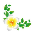 white background of realistic malva flower with vector image vector image