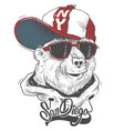 bear in cap print design for t-shirt vector image vector image