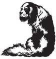 charles spaniel black white vector image vector image
