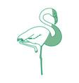 flamingo exotic bird vector image vector image