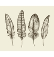 Hand drawn vintage bird feathers Sketch writing vector image