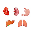 Human organs Internal organs set Human anatomy vector image