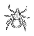 mite insect engraving vector image