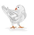 Pigeon white bird white dove symbol peace vector image vector image