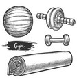 set isolated equipment for fitness gym or vector image