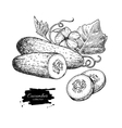 cucumber hand drawn isolated vector image