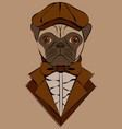 cute with pug in old-fashioned cap and jacket vector image vector image
