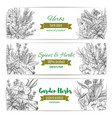 garden herbs and spices banner for food design vector image vector image