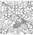 hawthorn seamless pattern vector image vector image